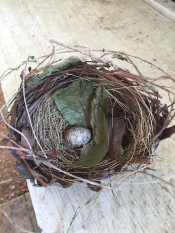 Cardinal nest and egg