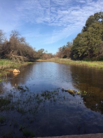 Comanche Creek flowing 2016