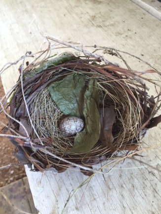 cardinal-nest-and-egg