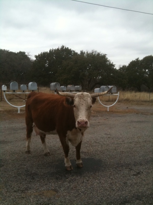 mail-delivery-texas-style