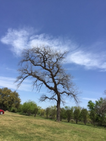 cloud caught in tree